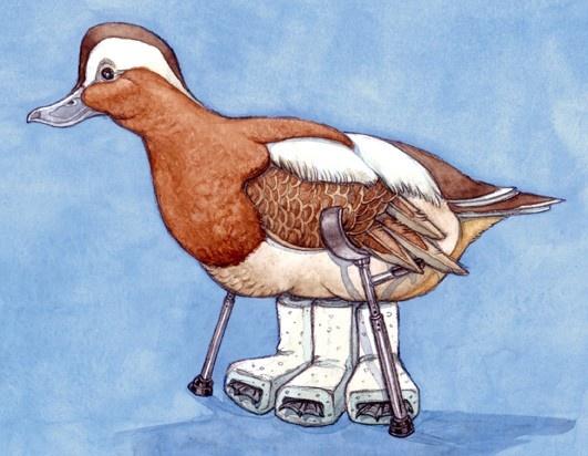 Canard-casser-trois-pattes-à-un-canard-boîteux.jpg de Lingettes pour Bébé Epaisses - Eco + de Leclerc Marque Repère